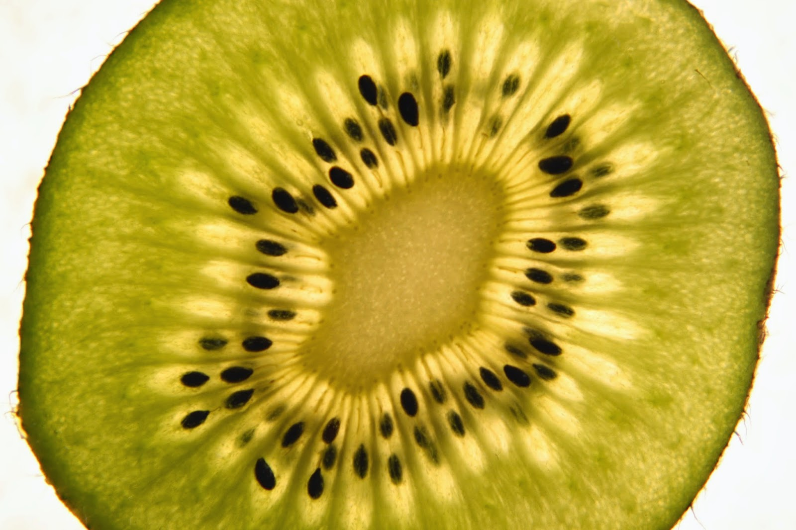 Kiwi Close-Up Photographed with 10x Close-Up Lens | Boost Your Photography