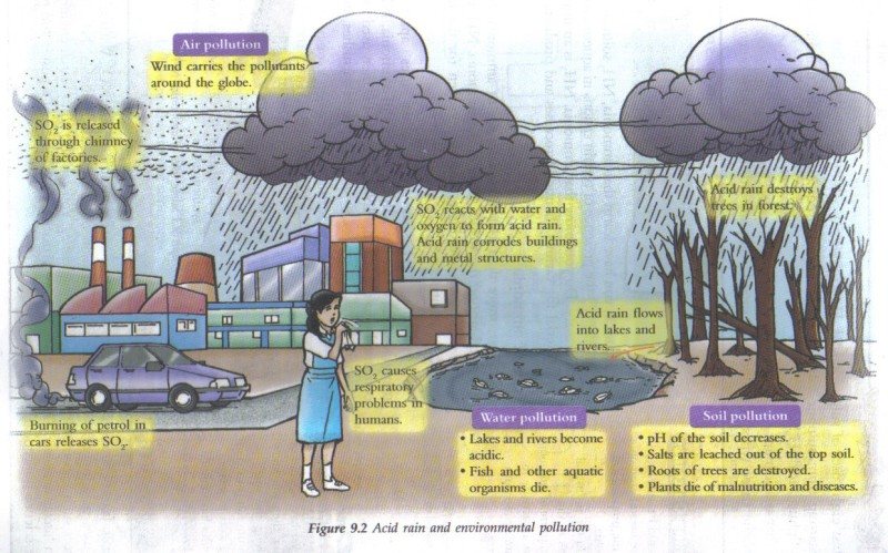 the negative effects of acid rain Some of the adverse effects of acid rain are as follows: acid rain may cause extensive damage to materials and terrestrial ecosystems such as water, fish, vegetation, soils, building etc 2 acid contaminates with potable water and enter man's body the heavy metals released by acid rain may cause.