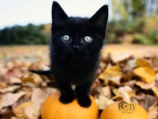 Photo chat noir