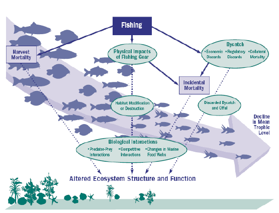 biology essay on overfishing Overfishing research paper essays: over 180,000 overfishing research paper essays, overfishing research paper term papers, overfishing research paper research paper, book reports 184 990 essays, term and research papers available for unlimited access.