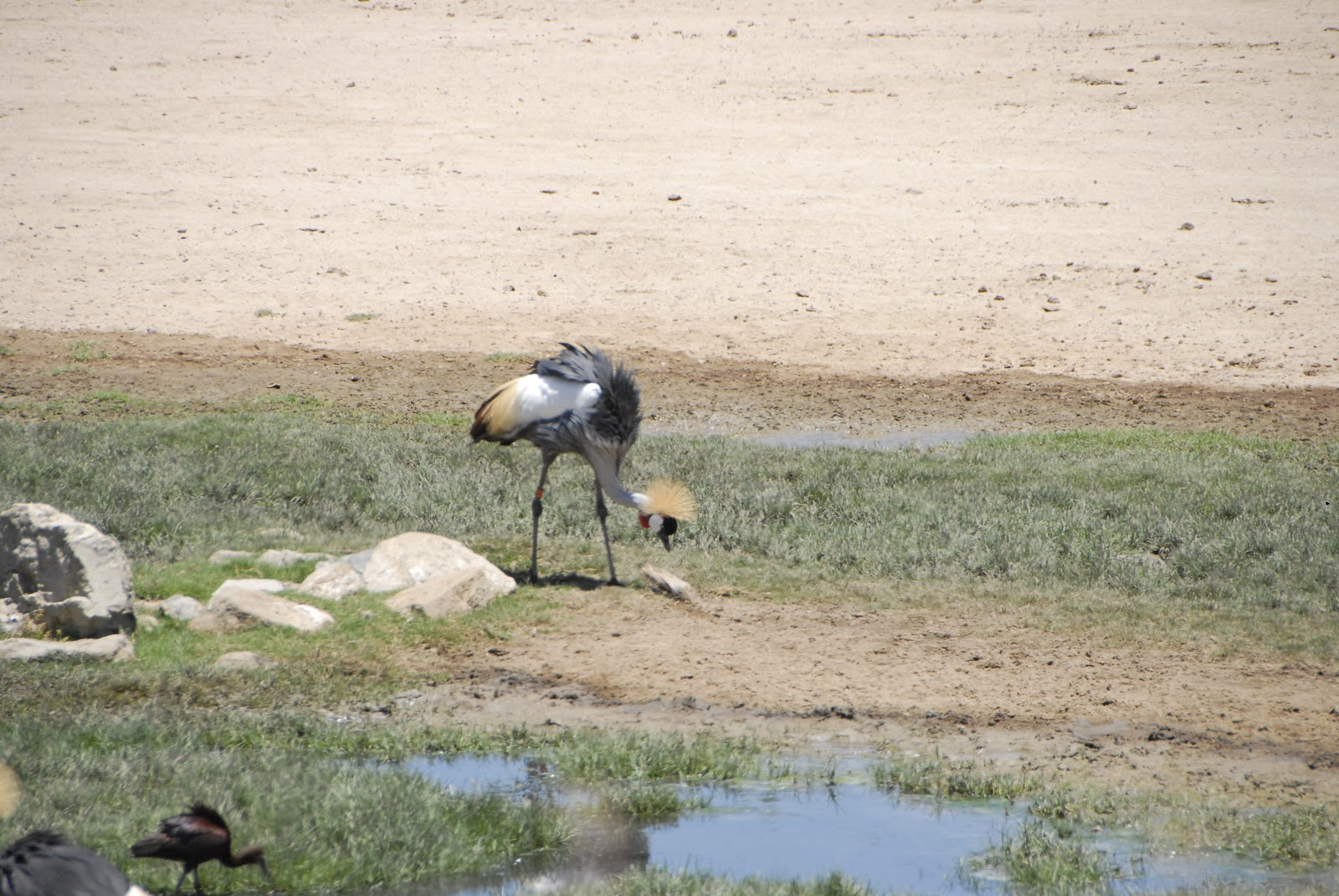Crane nesting in water habitat