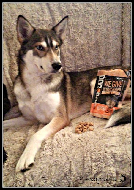 peanut butter Dog For Dog mini training treats