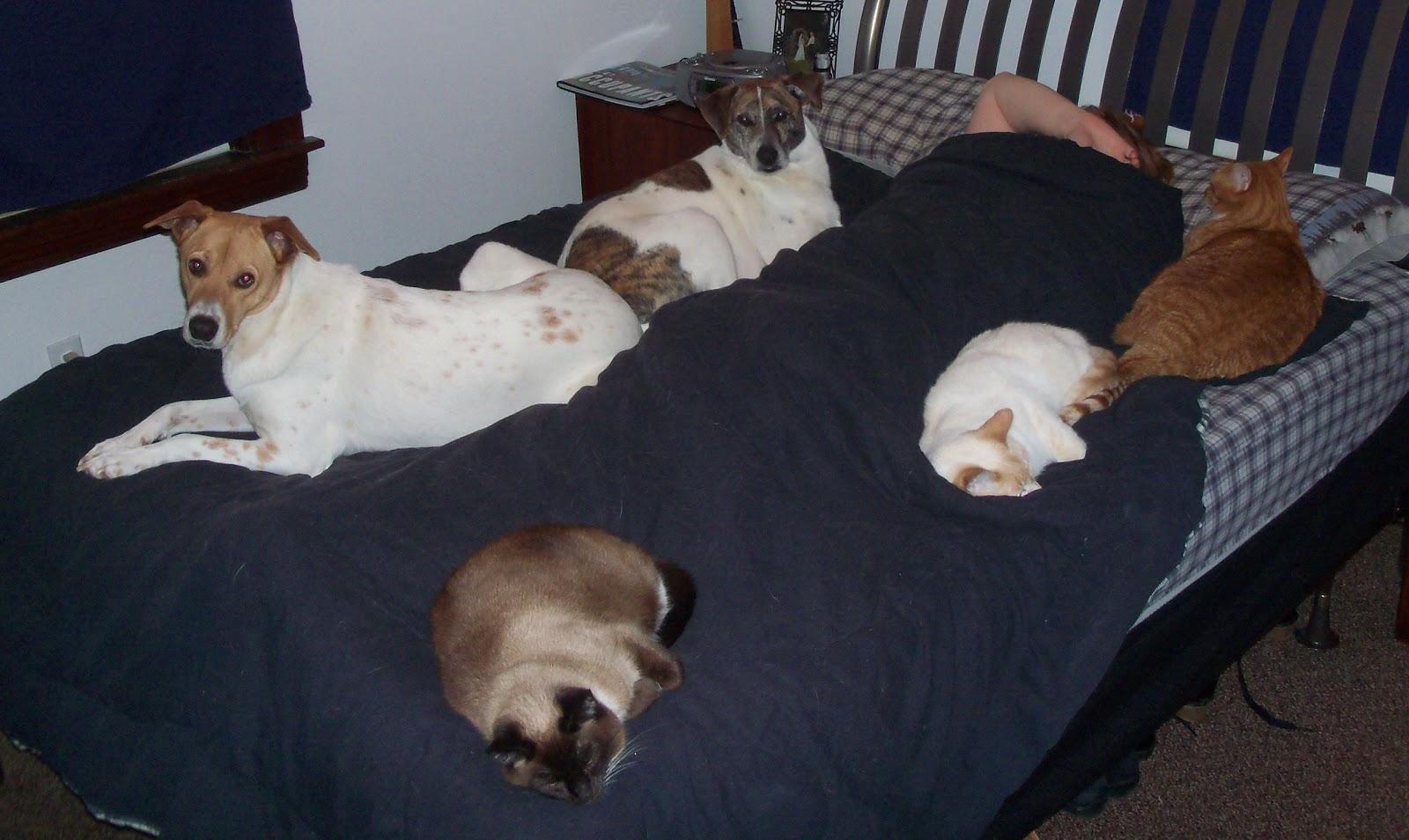 Dog hogging the bed - Good