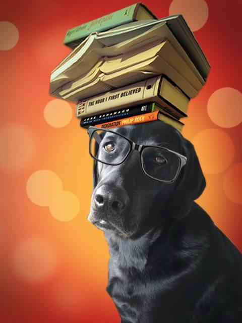 Book Doggy