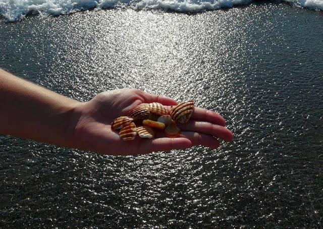 Muszelki na plaży w Torremolinos