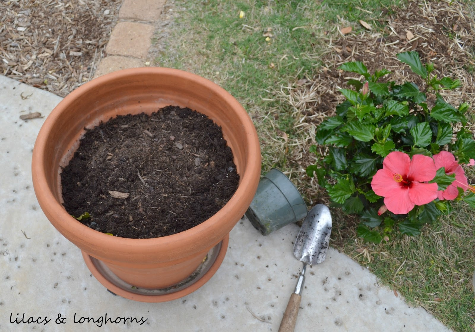 How to plant in large pots without spending a fortune lilacs and longhornslilacs and longhorns - Seven tricks for healthier potted plants ...