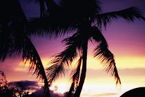 Paradise . .