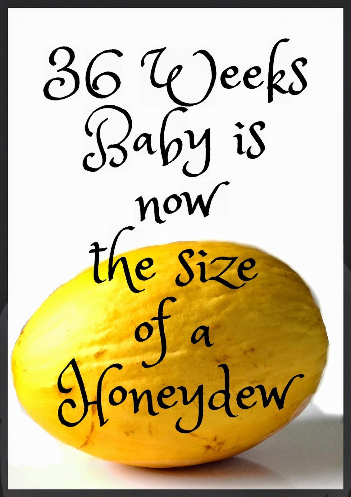 36 Weeks Pregnancy - Honeydew