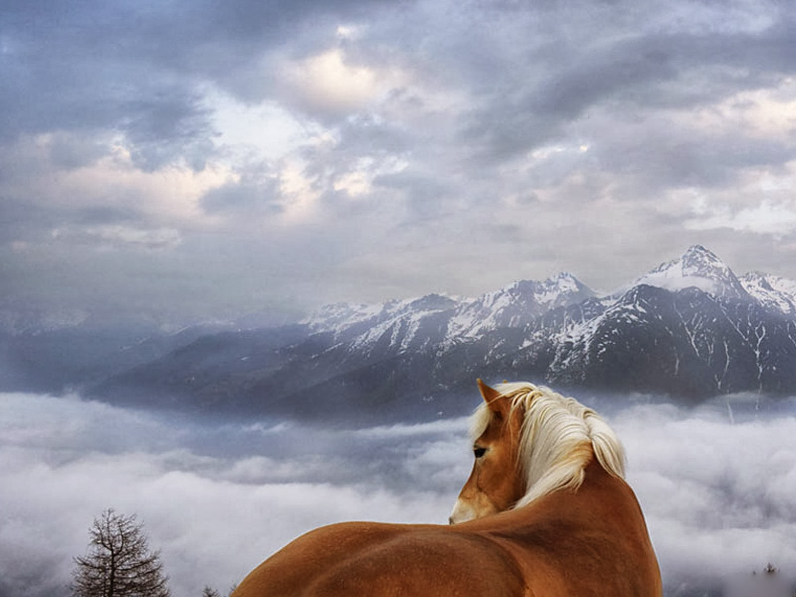 Horses hd wallpapers free hd wallpapers - Free horse backgrounds ...