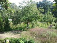 Apfelbaum mit dem GT-B7722 aufgenommen