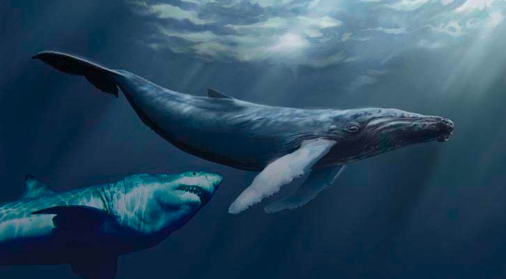 LIFE UNDER THE SEA: MEGALODON SHARK