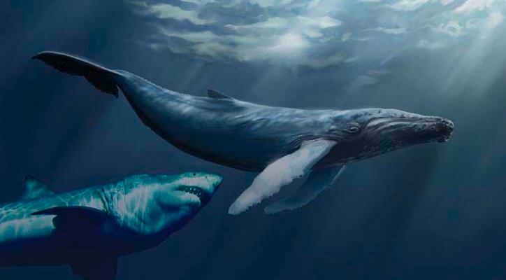 Prehistoric Sharks Megalodon