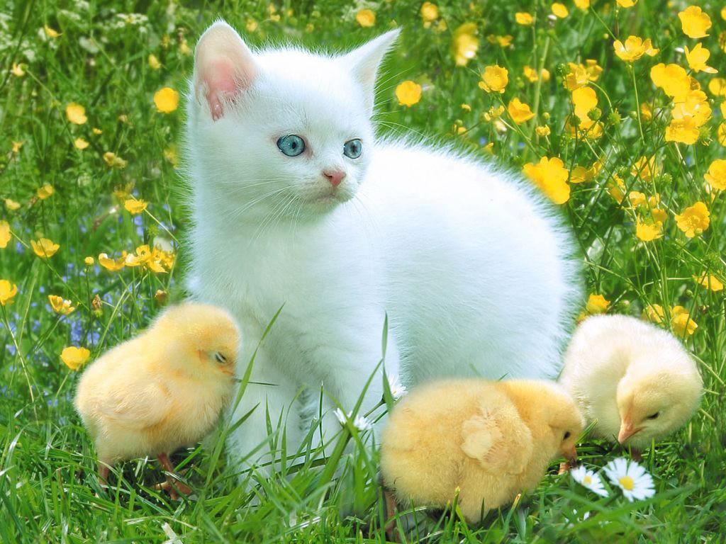 http://2.bp.blogspot.com/-ls-m-Ep9u-I/Td0XYGiyQGI/AAAAAAAAA4I/Q_93jMhqxqY/s1600/Cat_wallpapers.jpg