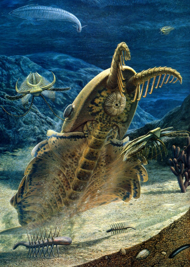 Giant Prehistoric Sea Creatures The Invertebrat...