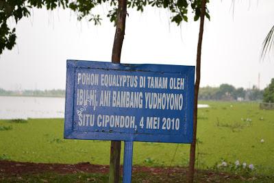 Pohon Equalyptus ditanam ibu ani bambang yudhoyono