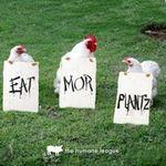 Eat Mor Plantz