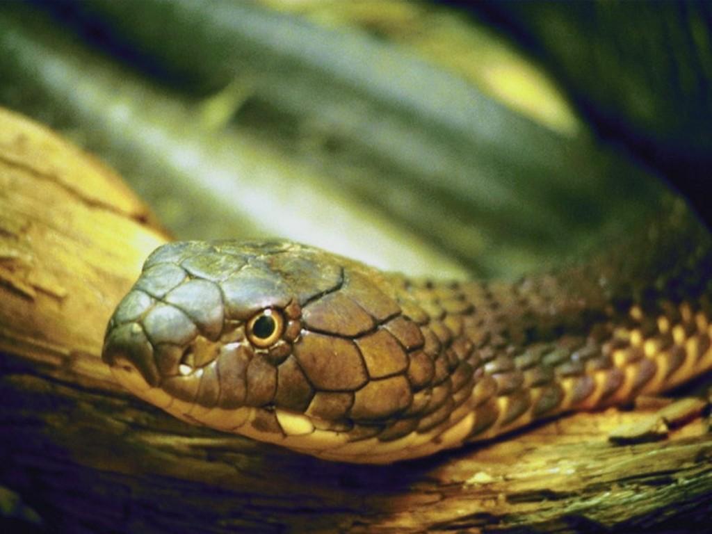 snake - photo #9