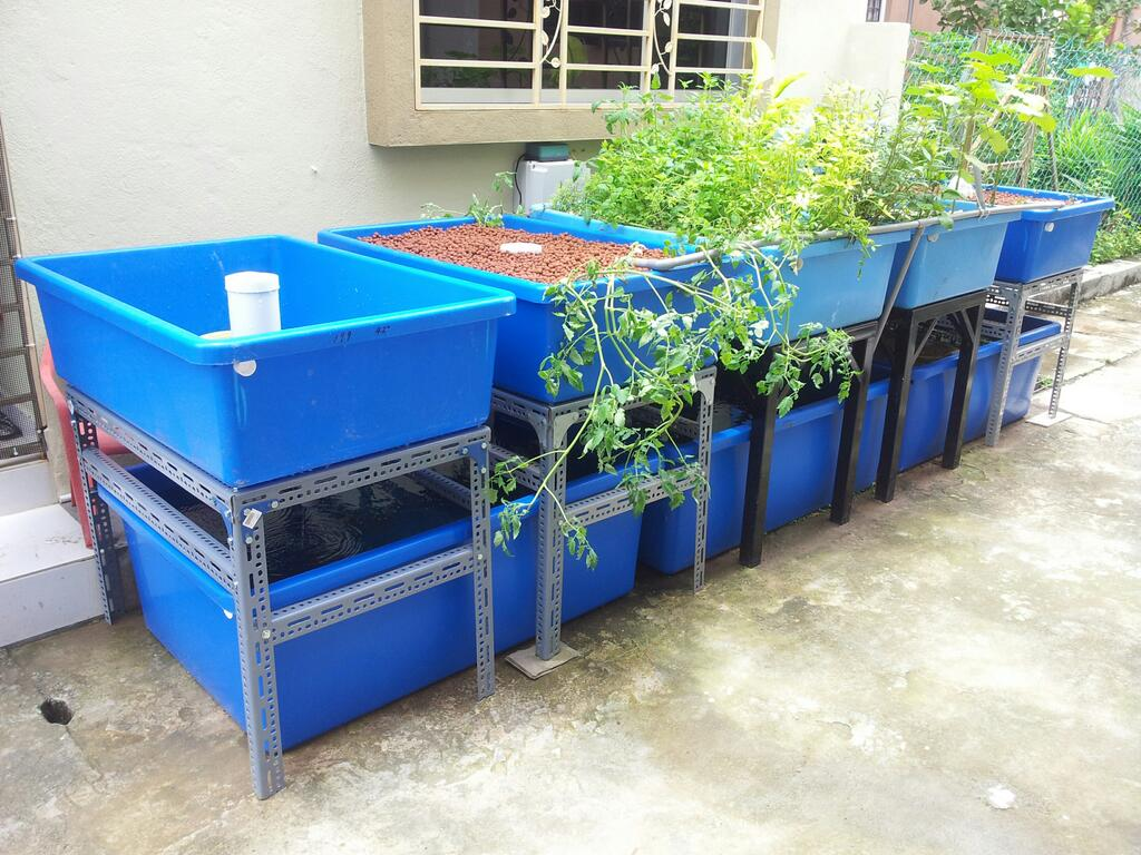 Affnan 39 s aquaponics continuous flood conversion for Fish used in aquaponics