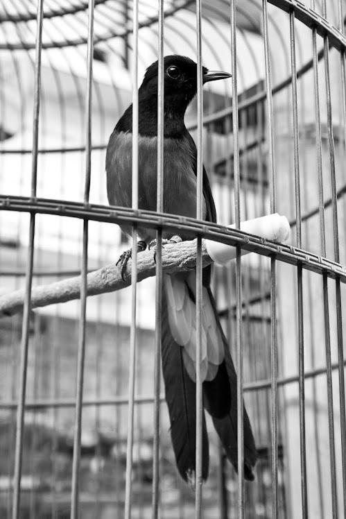 Aku Terpenjara. 2011