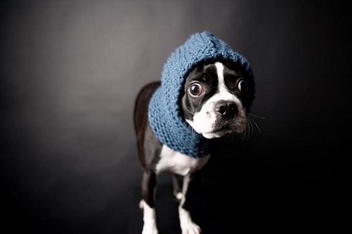 Dog in snood