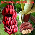 Banana vermelha e suas propriedades
