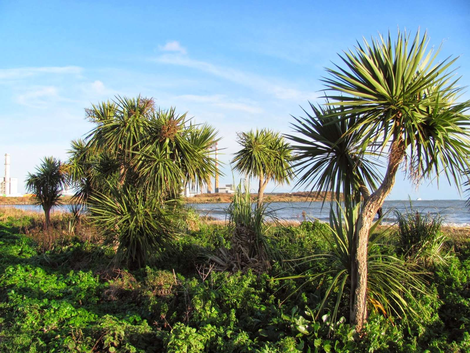 Palm trees on Sandymount Strand in Dublin, Ireland