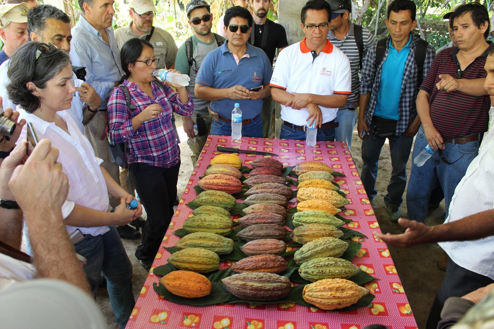 Chocolateros internacionales elogian calidad del cacao de San Martín