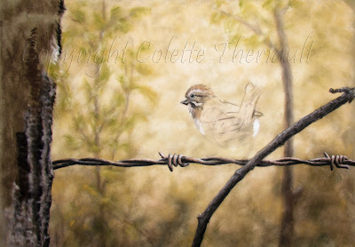Sparrow bird painting in pastel by Wildlife artist Colette Theriault, Sudbury, Ontario, Canada