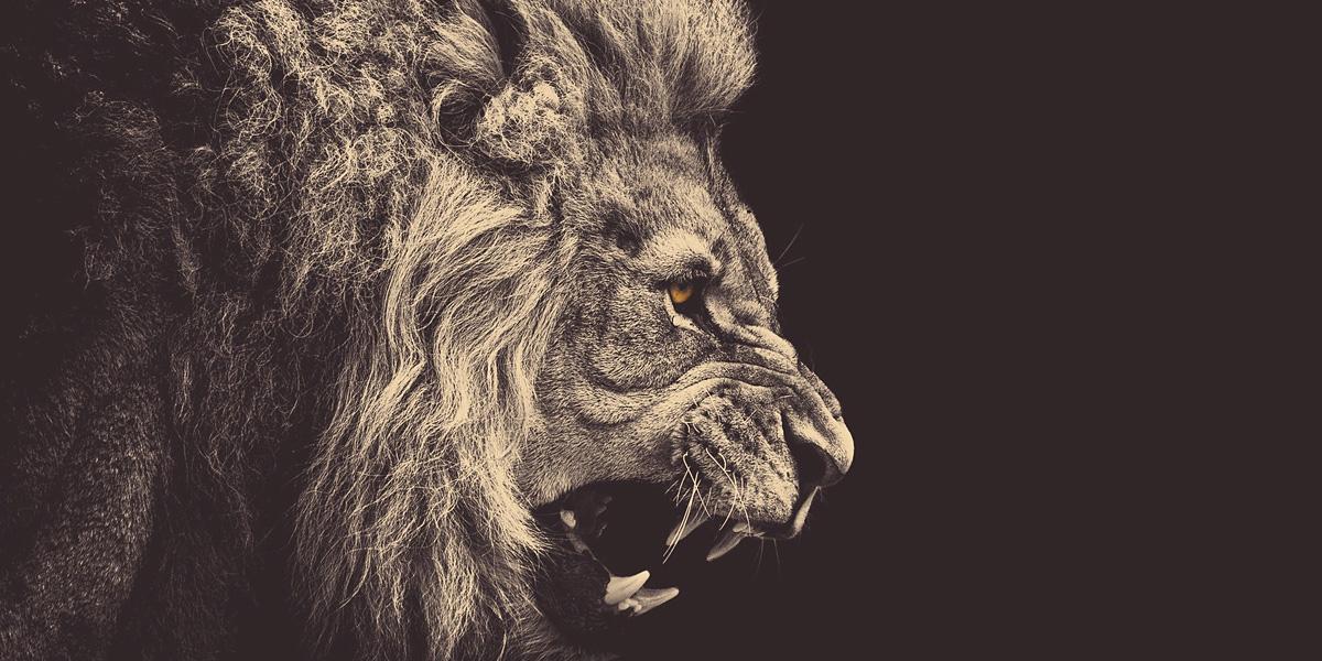 Lion 300+ Muhteşem HD Twitter Kapak Fotoğrafları