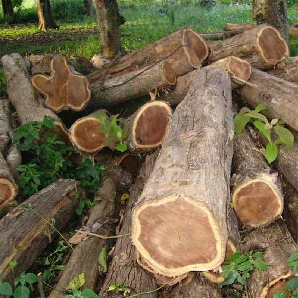 sejarah kayu jati, mebel jepara, mebel furniture