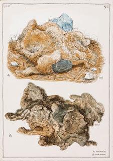 Dead animal, skin, egg tempera