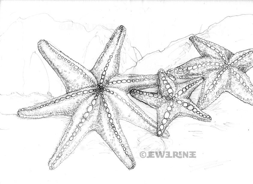 jewel renee illustration starfish 7 legged and otherwise