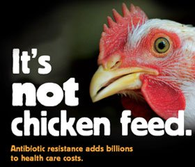 Chicken infected with antibiotic resistant bacteria