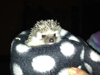 Pets in the Classroom, Hedgehogs Visit, The Schroeder Page