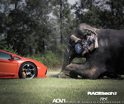 ADV.1 Wheels Cocktail: Lamborghini Aventador and Elephant