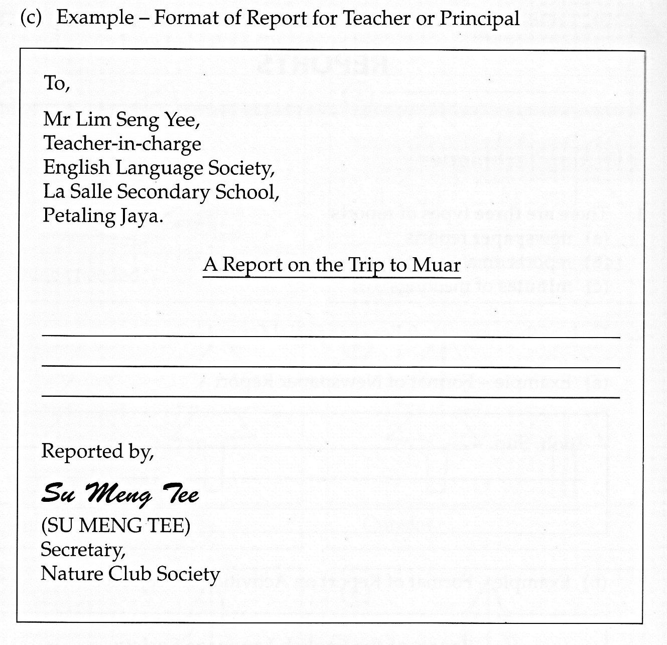 different essay report