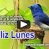 FELIZ HERMOSO LUNES - Mensajes para felicitar y desear muchas bendiciones (Vídeos que Inspiran)