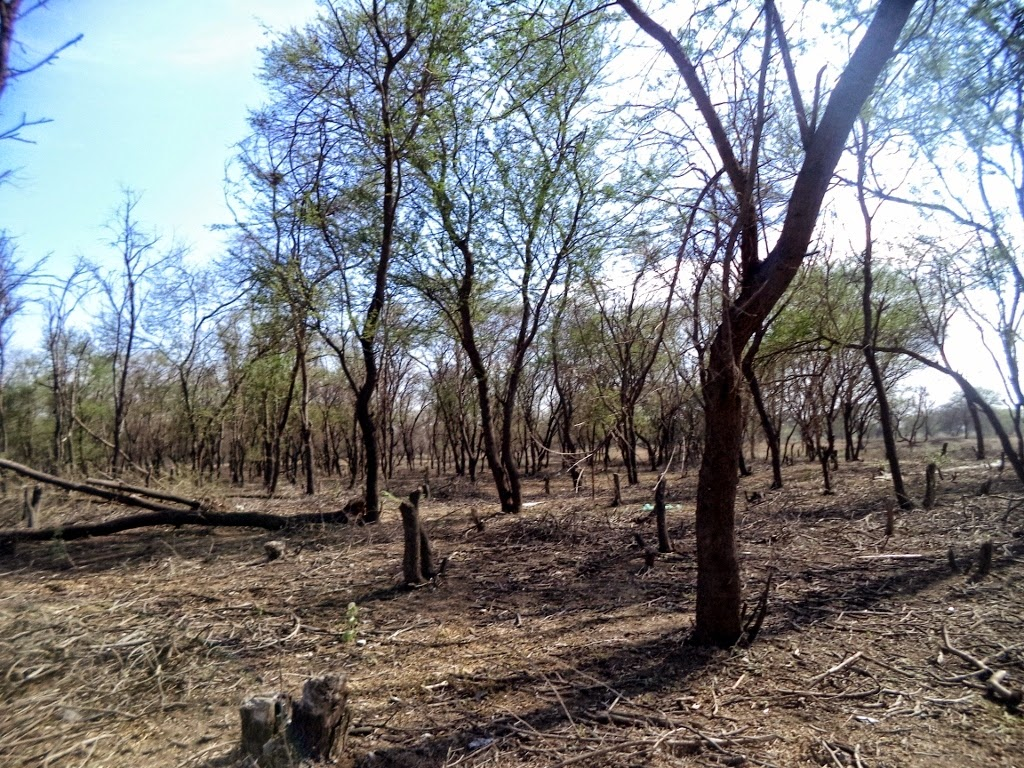 Deforestation in Vellalore, Coimbatore