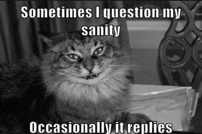 questioning face cat - photo #18