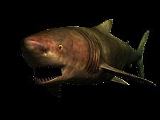 Shark Megalodon