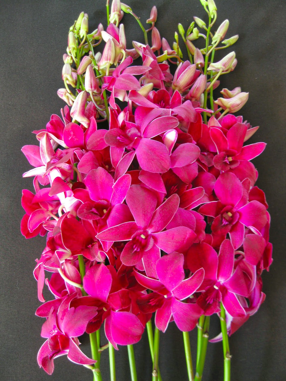 orchidaceous orchid blog, Beautiful flower