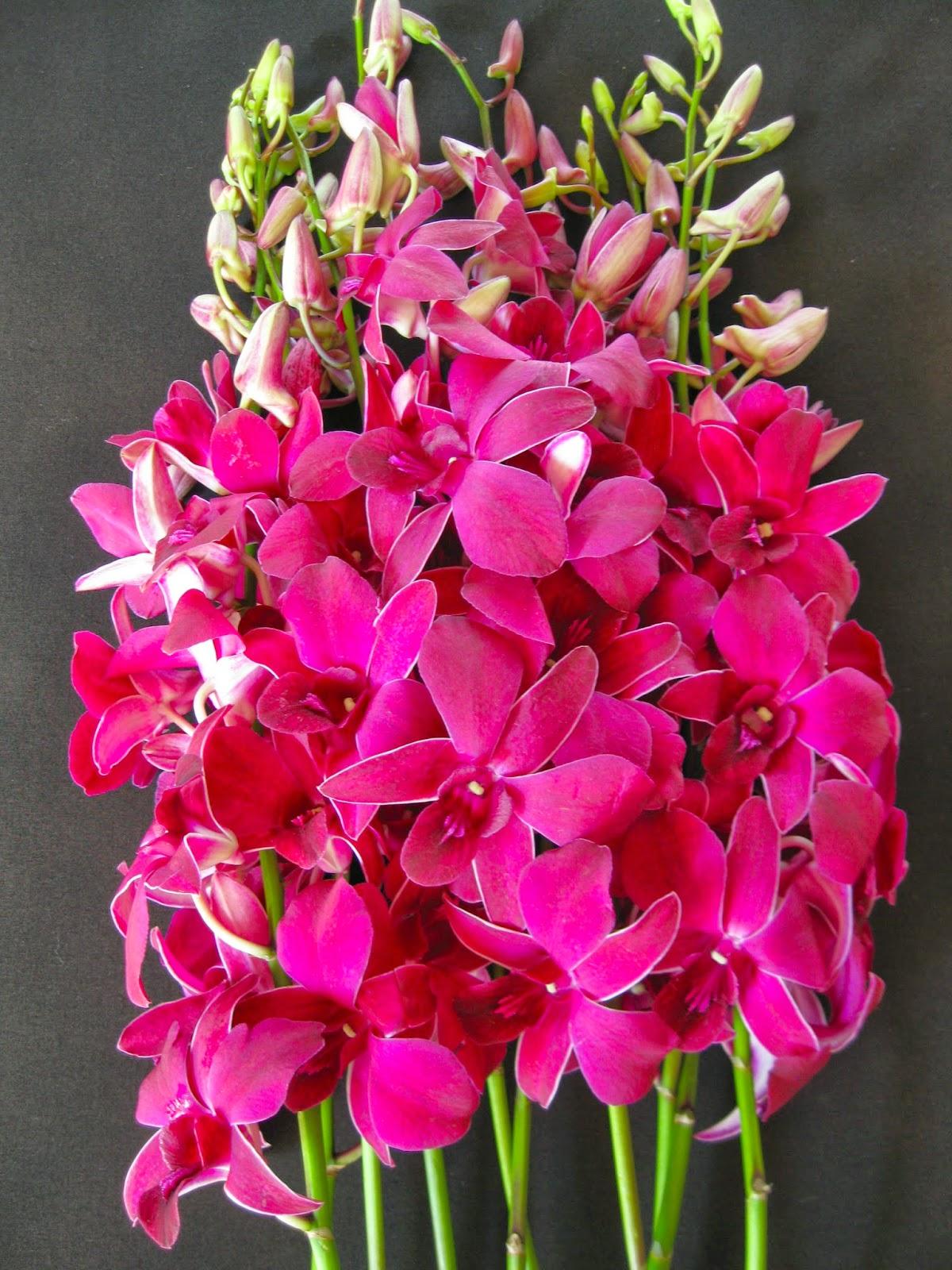 Orchidaceous Orchid Blog