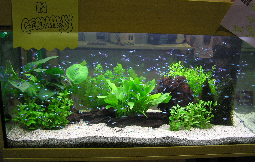 ... - Natural Planted Tank (Walstad Method).: Fresh Water Aquascaping