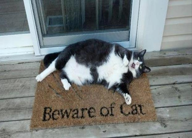 Beware of fat cat on the mat