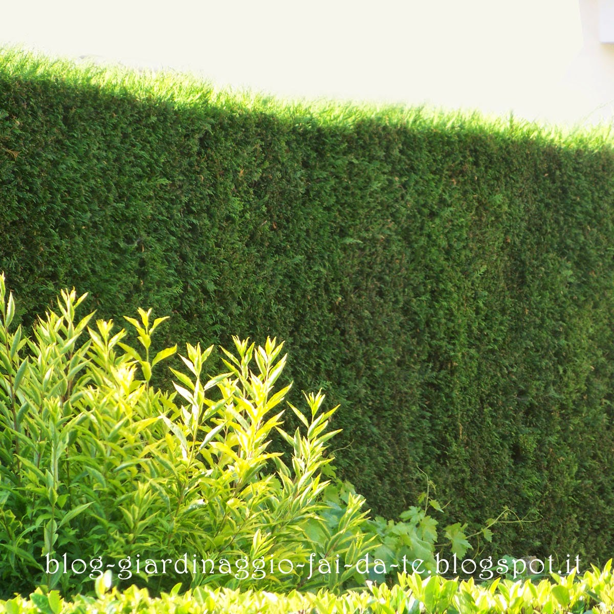 1200 x 1200 jpeg 365kB, Verdeblog Giardinaggio Fai Da Te # 2016 Car ...