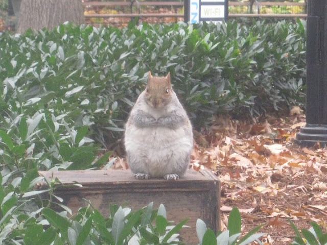 fat squirrel, funny animal pictures, animal photos, funny animals