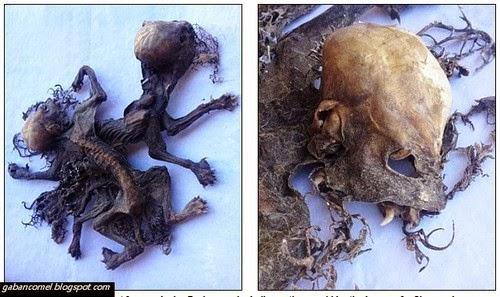 Pelik Makhluk Lagenda Penghisap Darah Ditemui di Chile