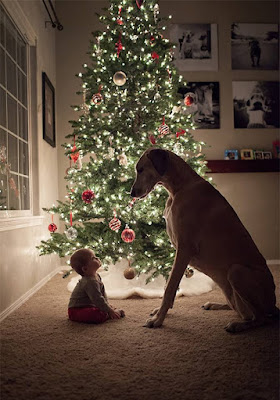 Cute Christmas With baby and Dog