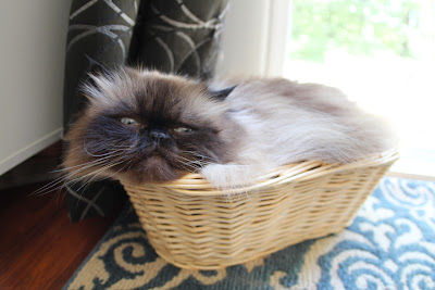 cat in basket 02