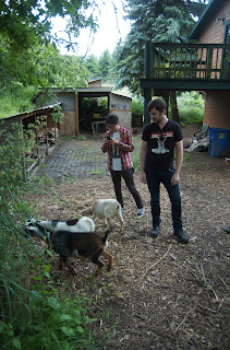 Andrew Torche goats